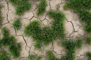 Q&A: When in Drought, Build Resilience