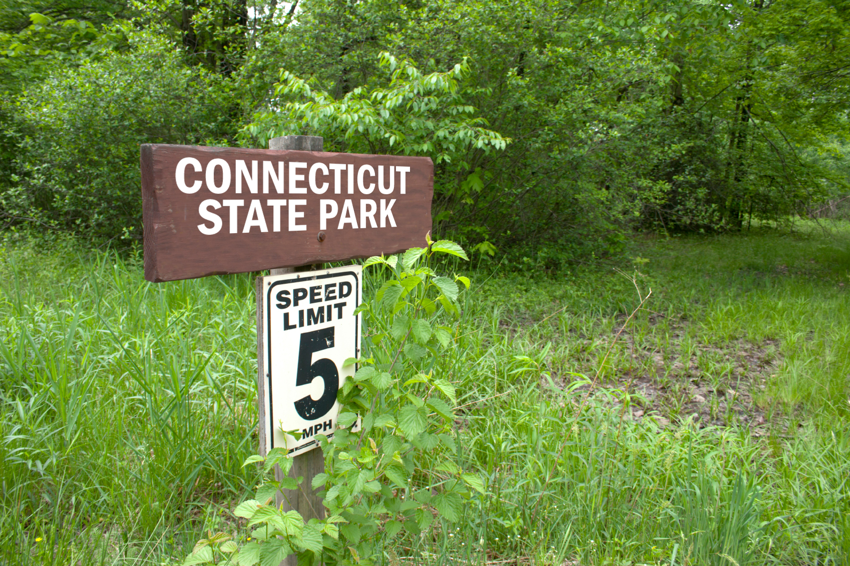 A Connecticut state park sign pointing toward a hiking trail