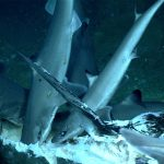 "An image of the ""shark feast"" from cruise EX1903L2 dive 7, (NOAA Office of Ocean Exploration and Research)"