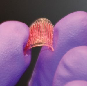 A tiny microneedle patch being held between the gloved fingers of a UConn researcher.