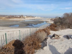 Old Christmas trees help preserve beaches along the Waterford shoreline