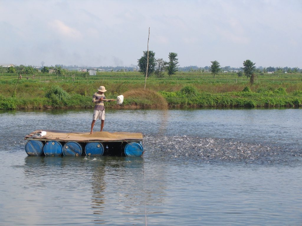 An aquaculture worker on a pond in Vietnam