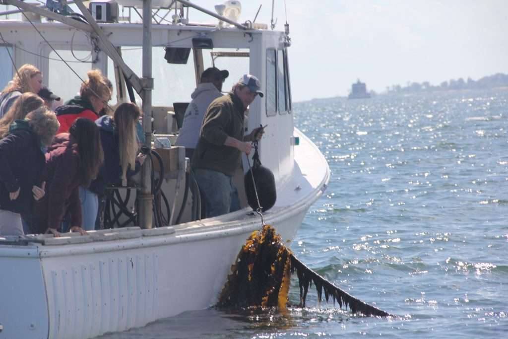 """Students in the """"Global One Health: U.S. and Irish Perspective"""" class at the University of Connecticut see kelp harvested from J.P. Vellotti's beds in Groton as part of a visit to the Noank Aquaculture Cooperative on May 16, 2019, organized by Connecticut Sea Grant."""