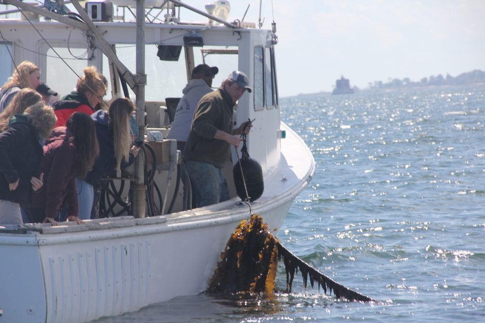 "Students in the ""Global One Health: U.S. and Irish Perspective"" class at the University of Connecticut see kelp harvested from J.P. Vellotti's beds in Groton as part of a visit to the Noank Aquaculture Cooperative on May 16, 2019, organized by Connecticut Sea Grant."