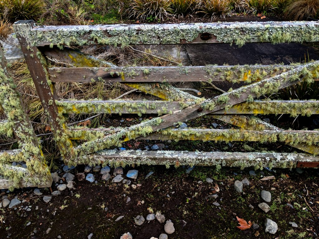Wooden gate covered with lichens. (Contributed photo)