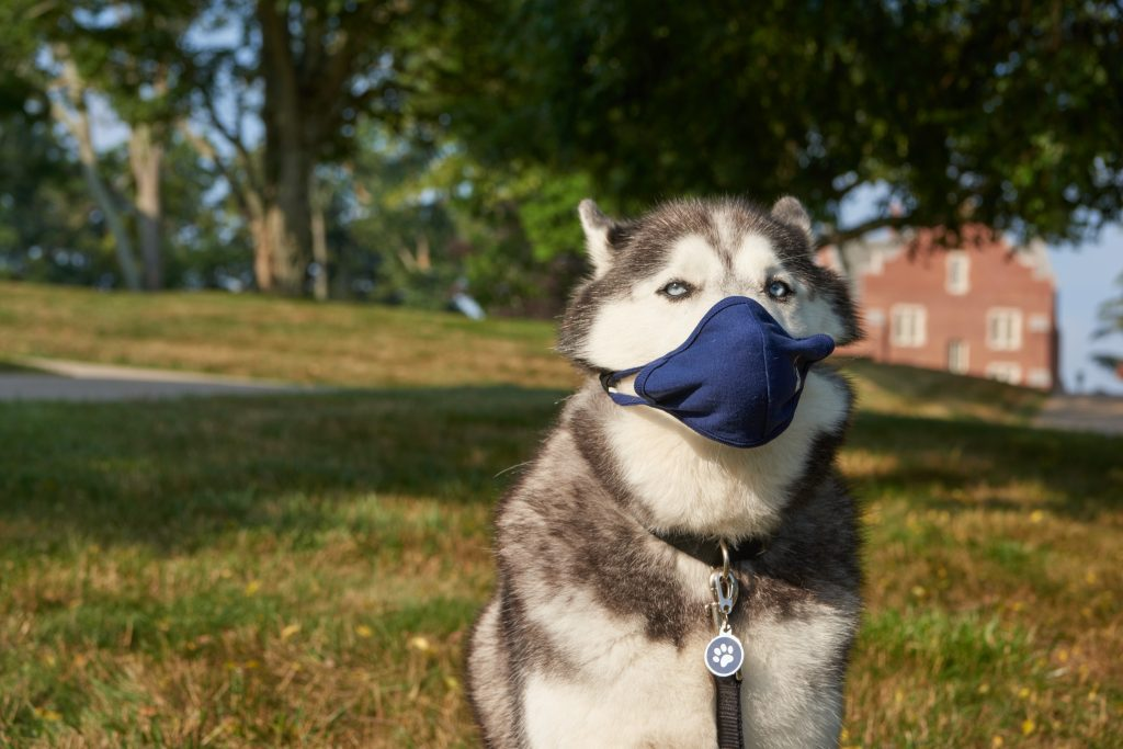 Jonathan XIV demonstrates the proper way to wear a  face mask on Aug. 11, 2020. (Peter Morenus/UConn Photo)