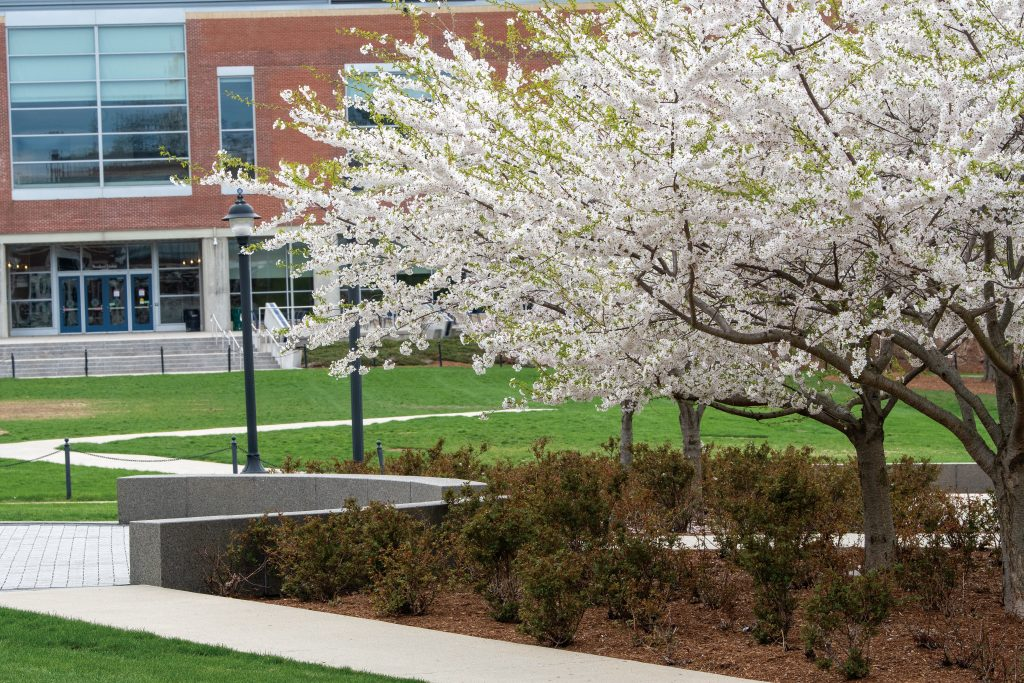 Trees and shrubs blooming across campus in spring April 19, 2021. (Sean Flynn/UConn Photo)
