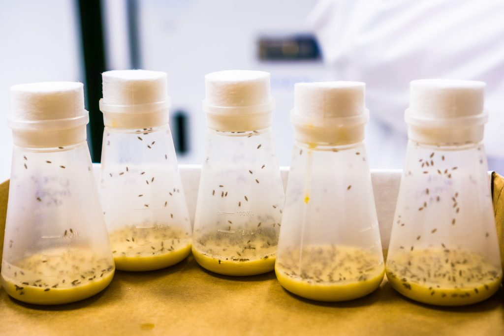 Research involving fruit flies could yield dividends for human birth control.