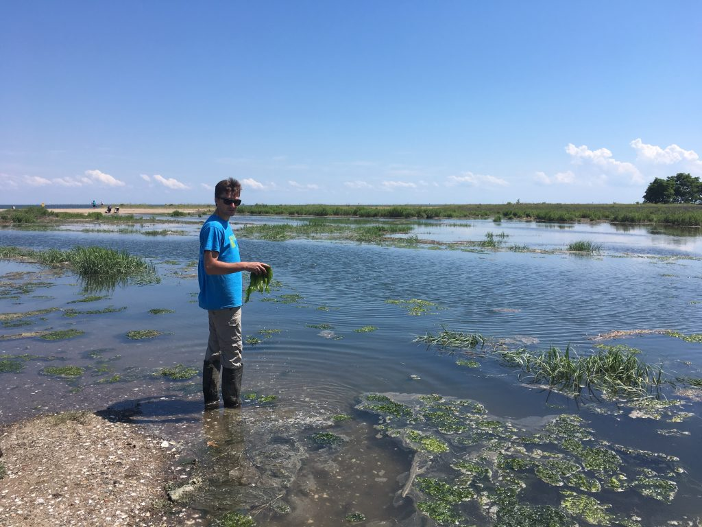 Aiden Barry '19 (CAHNR), lead author of the study, in a drowning salt marsh on the Connecticut coast.