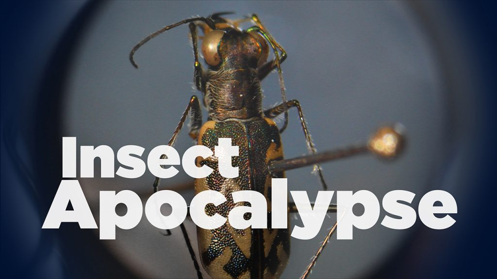 Dead bug with title of story across it
