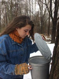 Young woman collecting maple sap