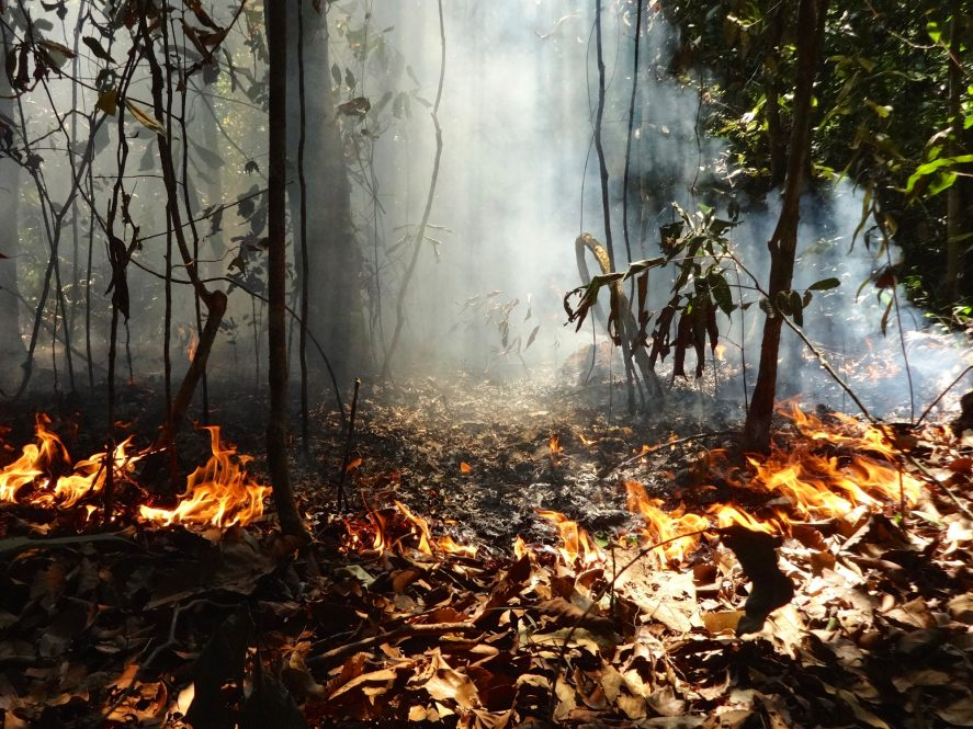 Ring of fire: Smoke rises through the understory of a forest in the Amazon region. Plants and animals in the Amazonian rainforest evolved largely without fire, so they lack the adaptations necessary to cope with it.