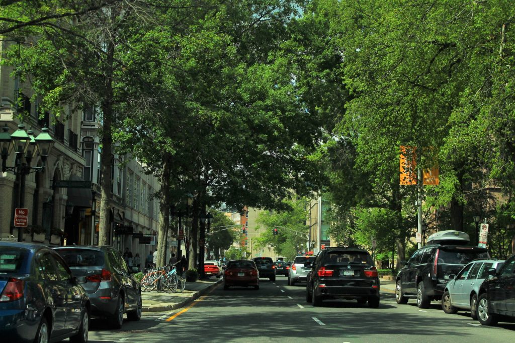 Tree-lined street in New Haven